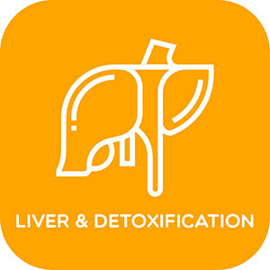 Liver and Detoxification